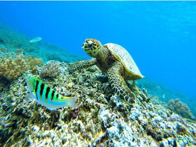 tortue-plongee-republique-dominicaine