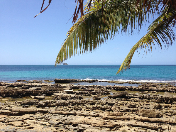 guadeloupe-plage-palmier