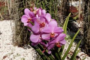 flore-guadeloupéenne-tropicale
