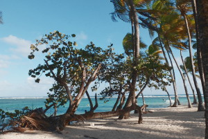 plage-caravelle-sainte-anne-guadeloupe-club-med