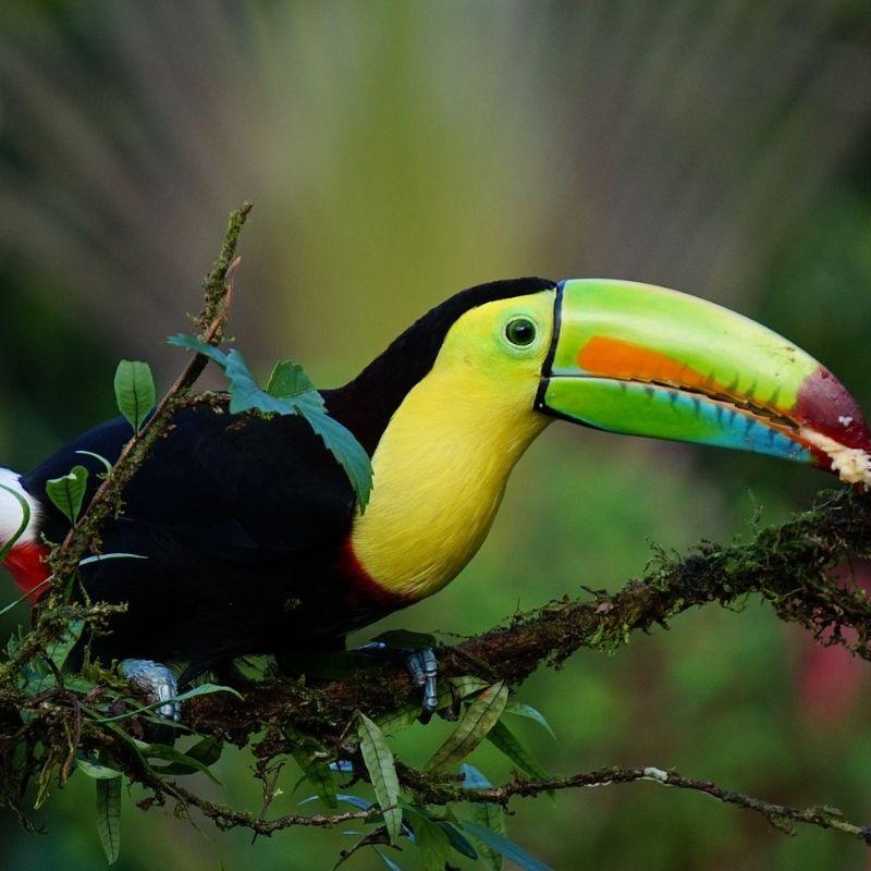 A Cebaco en croisière Costa Rica avec Via Dream un toucan