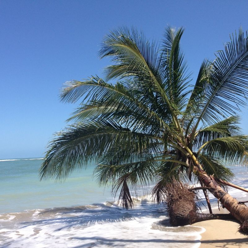 A Manuel Antonio en croisière au Costa Rica avec Via Dream un cocotier sur la plage