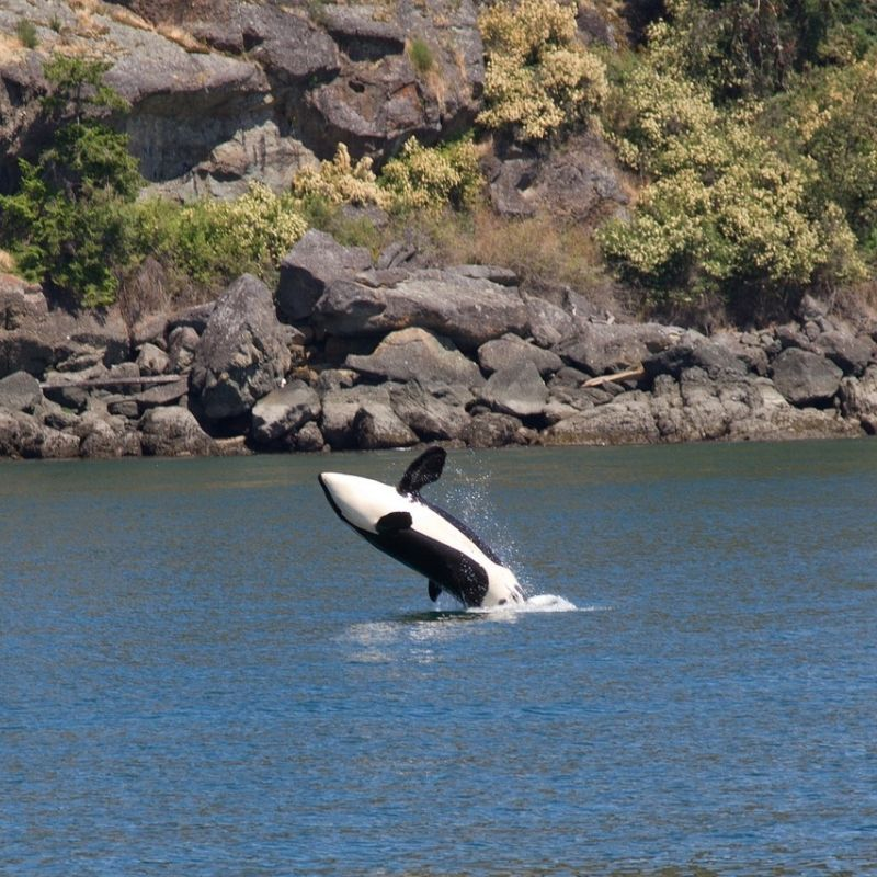 Canal Lynn et orque lors de la croisière Alaska avec Via Dream