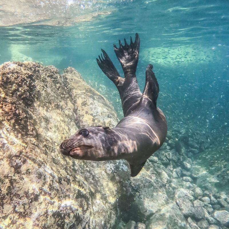 A Floreana la Couronne du Diable en croisière aux Galapagos avec Via Dream
